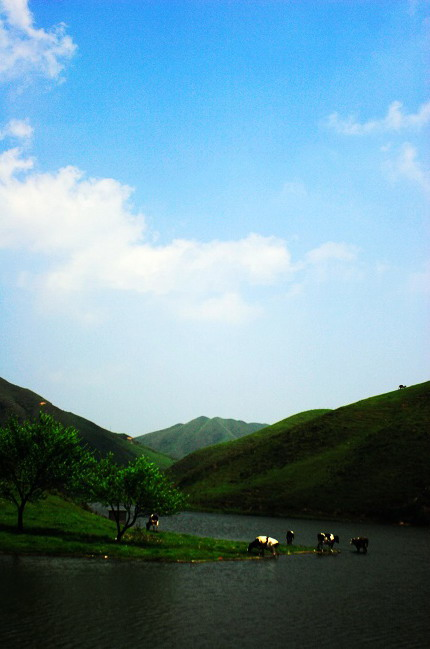 Mountain Nanshan Pasture9