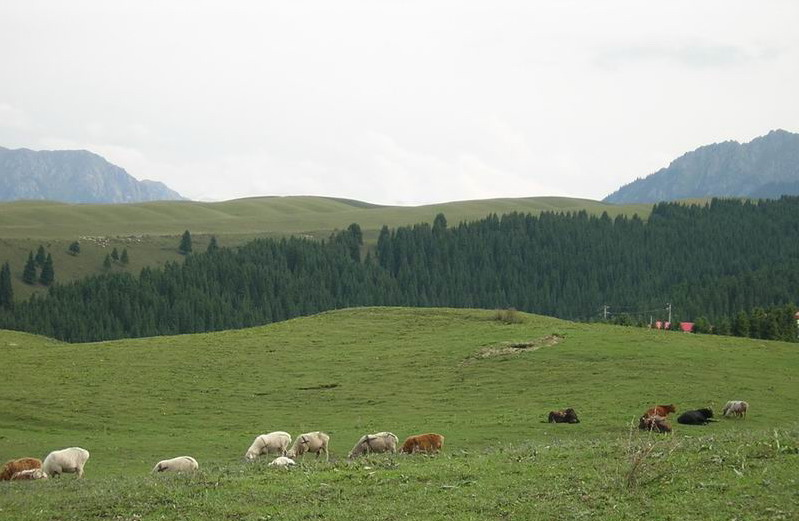 Mountain Nanshan Pasture15