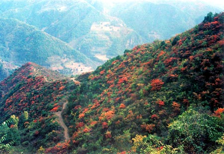 Mountain Wangwu Scenic Area13